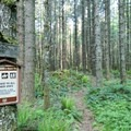 Woods characterize much of the Cloverpatch Trail.- Cloverpatch Trail Hike