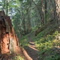 The shady undergrowth of the Cloverpatch Trail.- Cloverpatch Trail Hike