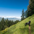 Wide vistas and dog-friendly hiking on the Cloverpatch Trail.- Cloverpatch Trail Hike