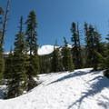 Diamond Peak viewed through the pines.- Diamond Peak: Pioneer Gulch/Southwest Ridge