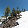 Thinning forest en route to the summit of Diamond Peak.- Diamond Peak: Pioneer Gulch/Southwest Ridge