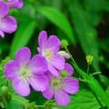 Beautiful wildflowers.- Devil's Lake State Park