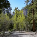 The cool shady canyon hike makes a nice getaway from nearby Las Vegas.- Big Falls in the Spring Mountains