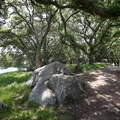 A scenic oak-covered woodland along the bottom of the trail.- Bishop Peak via Highland Drive