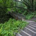 Hiking back down the trail.- Waterfall Trail