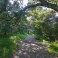 Large oak trees provide picturesque scenes along the hike.- Lupine Loop Trail