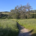 The loop trail falls back into the meadow as it returns to the park entrance and visitor center.- Lupine Loop Trail
