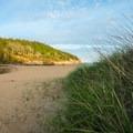 Beach grass and late evening light.- Sand Beach