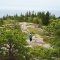 Following the open ridge near the summit of Gorham Mountain.- Gorham Mountain Trail