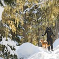 The climb to the second lake is mostly shaded. Mostly.- Joffre Lakes Provincial Park