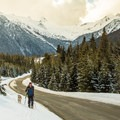 A short skin back along the highway to the parking lot.- Joffre Lakes Provincial Park