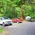 Campsites in Alder Glen Recreation Site.- Alder Glen Recreation Site