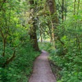 Paved river access to the dock.- Alder Glen Recreation Site
