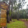 The trailhead is marked across from the parking area.- 'Aiea Loop Trail