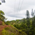 The trail crosses several power lines and grassy clearings.- 'Aiea Loop Trail