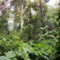 The lowest point of the trail crosses a small stream surrounded by lush green tropical flora.- 'Aiea Loop Trail
