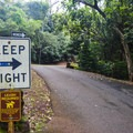 After entering the park, continue along the loop road, following signs to reach the trailhead.- 'Aiea Loop Trail