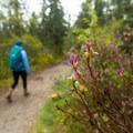 Walking toward the coast.- Wonderland Trail