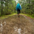 The trail is wide and flat, but it can be muddy.- Wonderland Trail