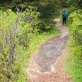 Headed back toward the parking area.- Wonderland Trail