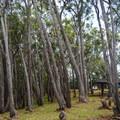 Nestled along the loop road are multiple other picnic pavilions.- Keaīwa Heiau State Recreation Area