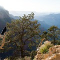 A raven enjoying the view from Cedar Ridge.- South Kaibab Trail Day Hike