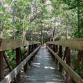 A bridge along the Rogue River Trail just before the trail junction to Whisky Creek.- Whisky Creek Cabin