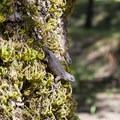 A lizard near Whisky Creek Cabin.- Whisky Creek Cabin