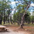 Typical site in Mather Campground.- Mather Campground