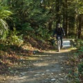The trail offers gentle climbing to start.- Burnaby Mountain
