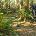 Very little technical riding.- Burnaby Mountain