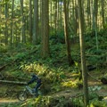 The forest opens up and lets light through.- Burnaby Mountain