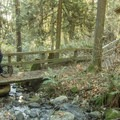 There are a few bridge crossings along the trails.- Burnaby Mountain