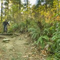 Steep sections allow you to build up some speed for the pedal sections.- Burnaby Mountain