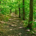 Easy section of trail with very gradual terrain.- Gile Mountain