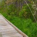 The boardwalk lets you approach the wetland quietly.- Alice Bemis Thompson Wildlife Sanctuary