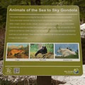 You'll find interpretive signs throughout the trails.- Sea-to-Sky Gondola Summit