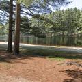 Soft pine needles blanket the ground.- Schreeder Pond