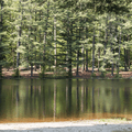 The planted pine groves across the pond.- Schreeder Pond
