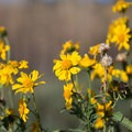 Wildflowers fill the field near the hanger in September.- Red Butte Airfield