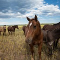 Horses as well as cattle and elk can frequently be seen in the field containing the old runway.- Red Butte Airfield