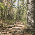A trail in Mansfield Park.- Mansfield Hollow State Park