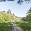 The northern end of the Levy.- Mansfield Hollow State Park
