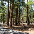 Well spaced tent sites.- North Rim Campground