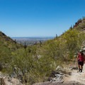 The top of the canyon is surprisingly lush, and the views are great!- Holbert Trail to Dobbin's Lookout