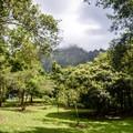 Kahua Kuou camping area.- Ho'omaluhia Botanical Gardens
