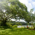 Sit by the lake under exotic tropical trees.- Ho'omaluhia Botanical Gardens