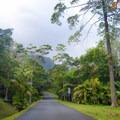 Driving through the park is like driving through a jungle paradise.- Ho'omaluhia Botanical Gardens