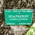 Pretty much every plant is marked with an informational plaque.- Ho'omaluhia Botanical Gardens
