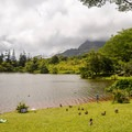 Head down to the lake for a picnic, stroll, or to go fishing on weekends.- Ho'omaluhia Botanical Gardens